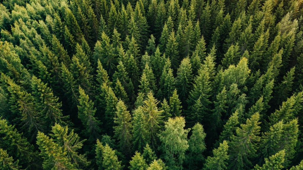 Conifer – metsäsijoittamisen kumppani