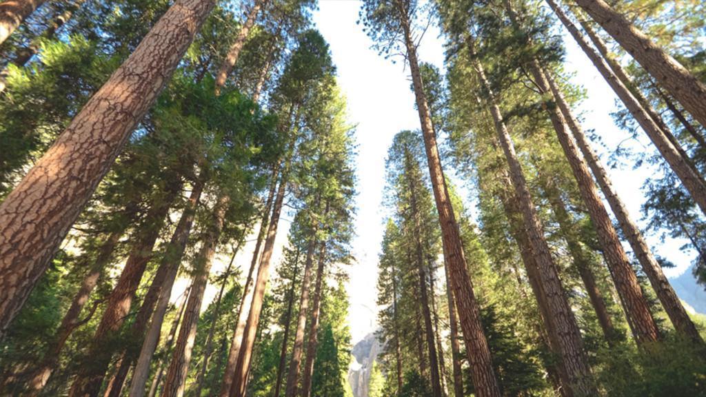 Simosol – puuston arvioinnin kumppani